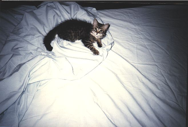 Photo of kitten on bed