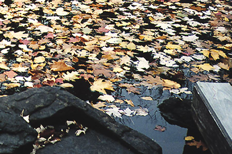 Photo of leaves in the river