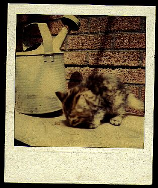 Photo of kitten beside watercan